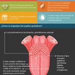 La lengua es un conjunto de músculos extremadamente movil que nos permite acciones tan importantes como hablar, tragar o chupar de forma coordinada. También es un órgano sensorial tremendamente potente que nos permite degustar la comida, de hecho es la parte del cuerpo más sensible para nuestro sentido del tacto.